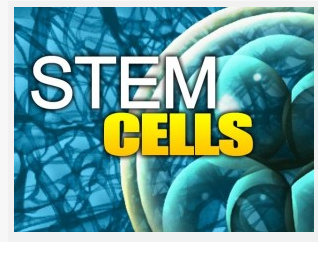Stem Cell By Kampon Sriwatanakul, M.D.,Ph.D